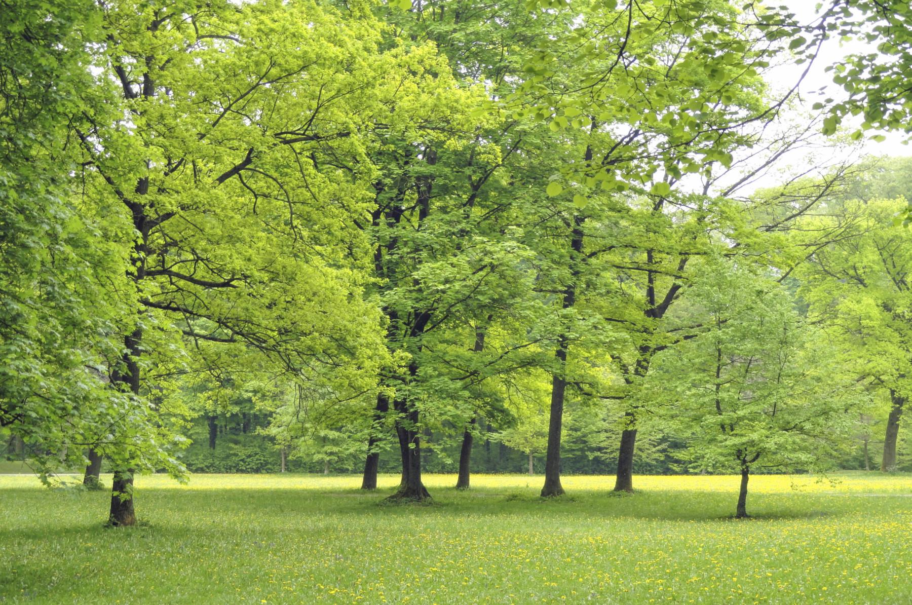 Wehringhauser Stadtwald in Hagen